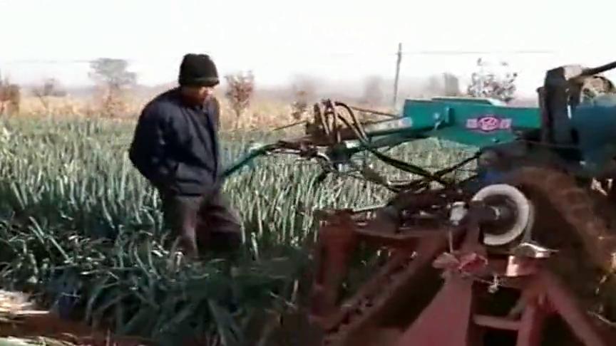 高科技无人驾驶,起葱机这速度省时省力,农民的又一项发明!