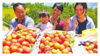 兰州:和平镇举办豆家山第二届山杏采摘节