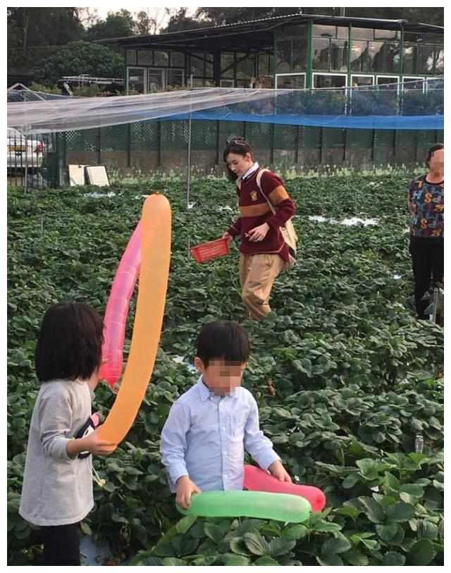 张柏芝带儿子户外摘草莓,背着双肩包如同学生