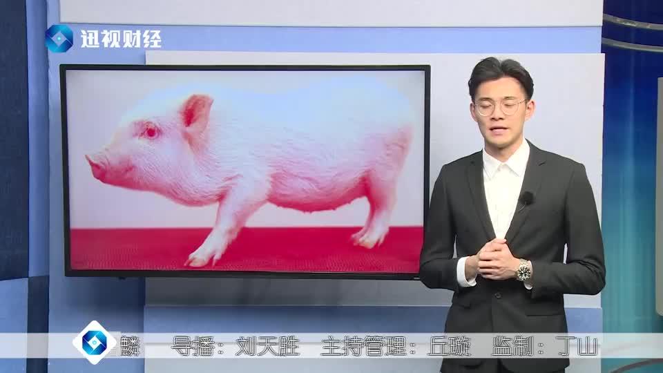 """猪器官可移植?以后的猪肉会更加""""昂贵""""么?"""