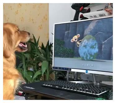 主人不让狗狗看电视非要它干家务,看到主人玩游戏狗狗叼来了围裙