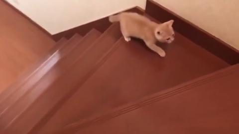 小猫学习爬楼梯,摇摇晃晃的样子,超可爱