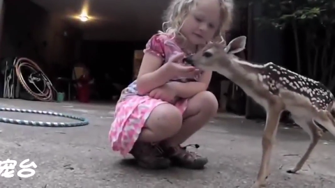 院子里来了一只串门的小鹿,还是很粘人的那一种