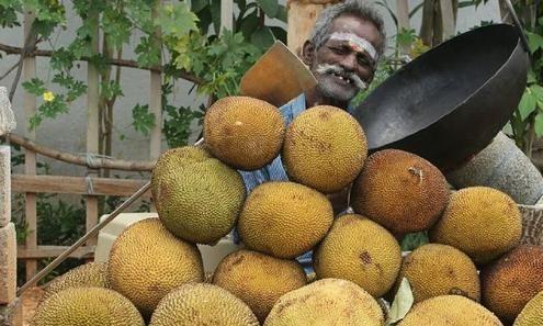 印度人如何吃菠萝蜜?超多菠萝蜜一锅煮,太土豪了