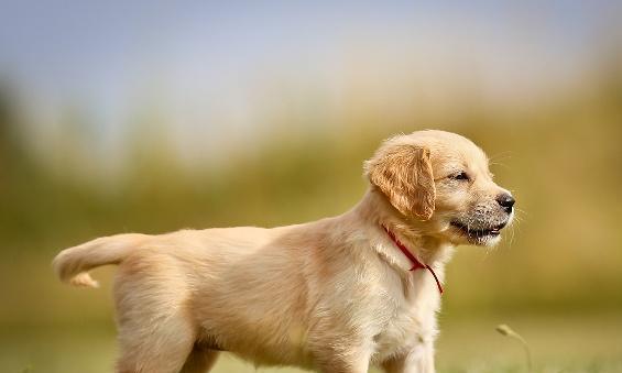 不小心被狗咬伤怎么办?做好这5件事,预防狂犬病毒的感染