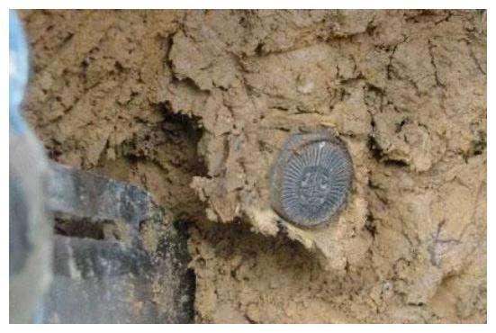 """女子野外挖蚯蚓, 发现""""古钱币"""", 挖出后庆幸自己没去捡"""