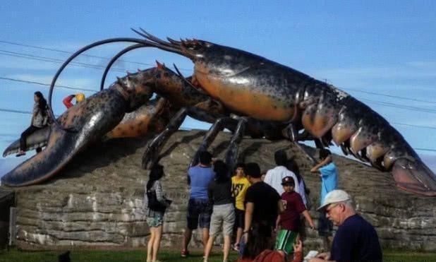 这只龙虾活了130多年,国家特赦免死,吃货只能眼巴巴流口水