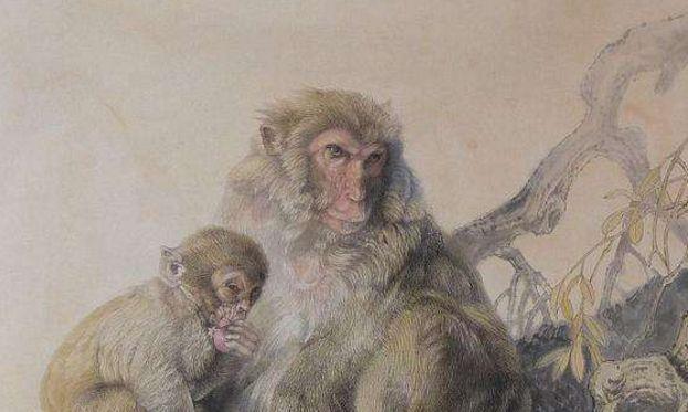 属猴人的命理运数,早看早知道,你家有猴人吗