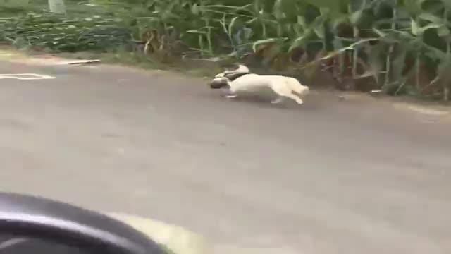 动物也有灵性!狗妈妈叼着孩子离家出走,开车追了一路愣是没停!
