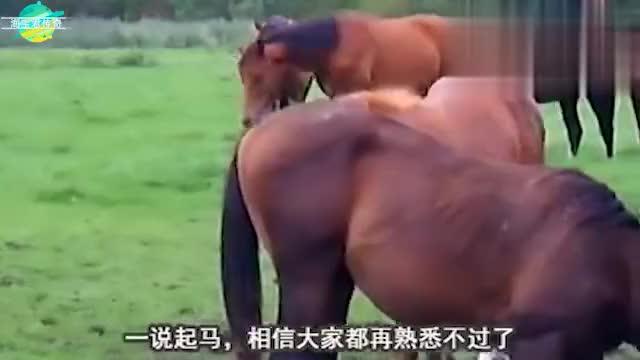 男孩给马驹喂奶,站在一旁的马妈妈反应让人暖心