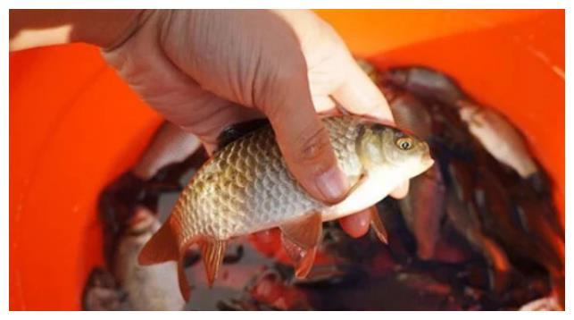 小伙吃小鲫鱼被鱼刺卡住,医生教他一个做法,再也不怕鱼刺卡喉咙