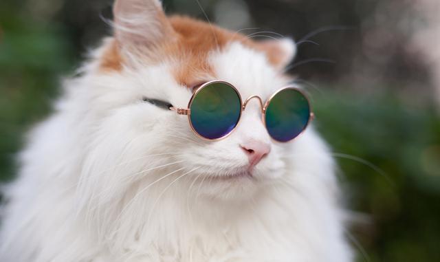 6s可爱猫咪壁纸