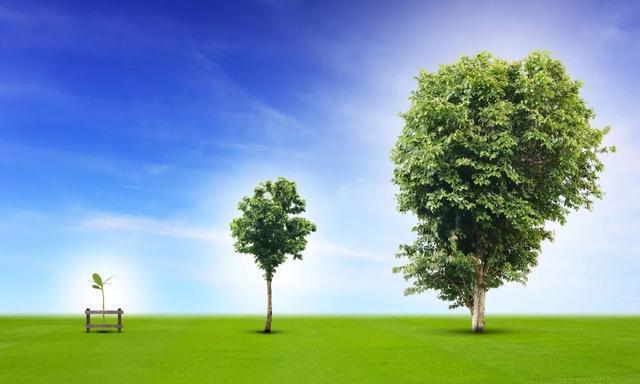 漫画:什么是最小生成树?