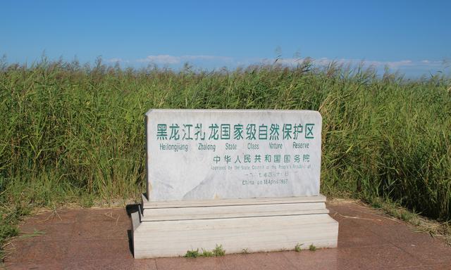 """一路向北!探访""""鹤的故乡""""黑龙江扎龙国家级自然保护区"""