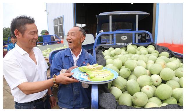 湖北枝江:甜瓜熟了,农民排队卖瓜,头天每斤1元,今日每斤8角