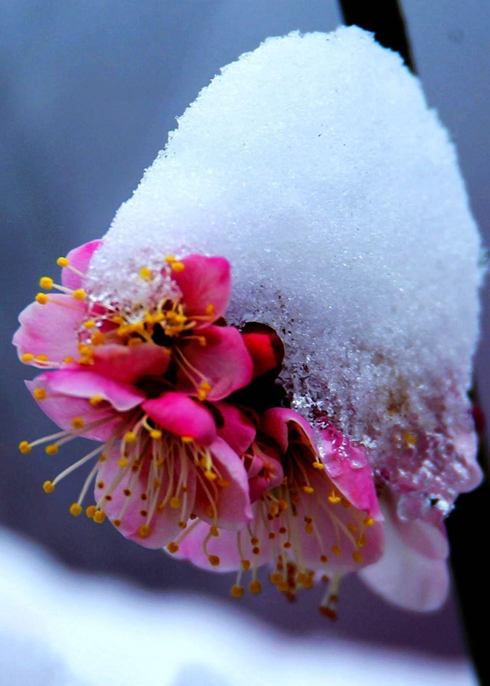梅花山六:位于南京市紫金山明孝陵景区内,是钟山风景名胜区部分