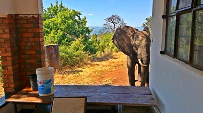 这头大象被偷猎者袭击后向人类求救,接下来的让人暖心!