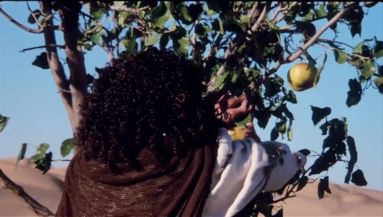 沙和尚发现两个果子,拿给师父吃,悟空说果子有毒