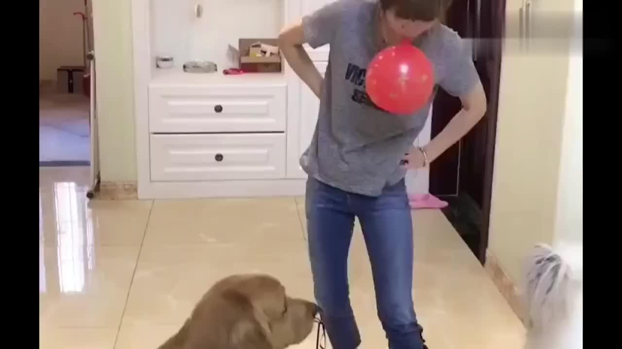 胎妈用气球逗来来,没想到竟然发生这种事,来来的反应好快啊