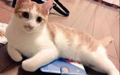 俘获:读懂表情的微表情,分分钟不能它的心!揭秘猫咪包碰图片