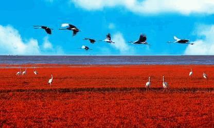 是谁打破了上帝的调色板,泼墨了大红色的海滩,去辽宁盘锦瞧一瞧