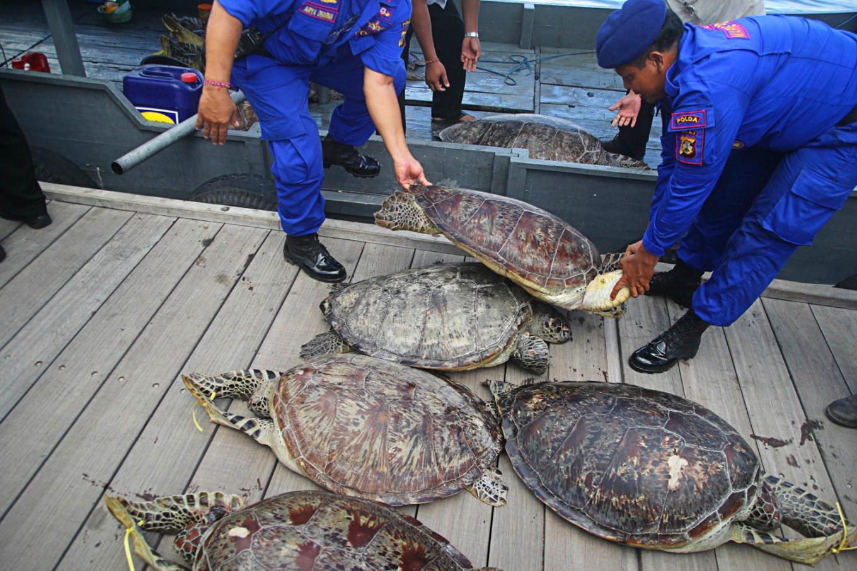 印尼海关发现可疑货船,警方强制搜查后在箱子里找到情况