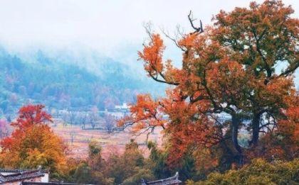 如果,你也爱这人间的色彩斑斓,就来塔川村看看吧!