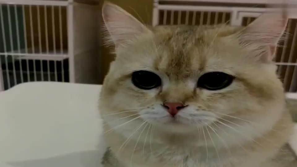 萌宠:小猫咪与女主人顶嘴,好可爱啊!