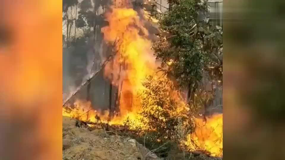 「福建」永安突发森林火灾70名森林消防员用时4小时将火扑灭