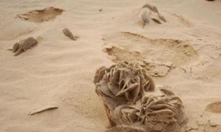 """为何沙漠中看见""""石头""""要捡起?探险者:错过就没了"""