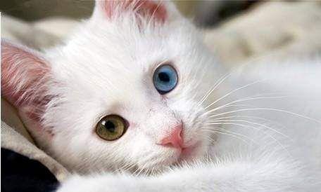 如何训练猫咪用猫砂大小便?