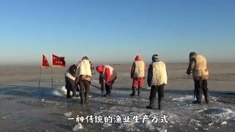 东北人冰里凿鱼,一条40斤的鱼能卖百万天价?土豪抢破头买不到!