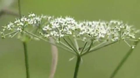 长白山像一个宝库,每年都能采到野山菌,榛子和中药材