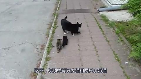 猫妈妈教小奶猫学走路猫妈妈看到孩子没跟上竟然还鼓励它们