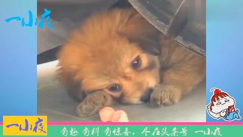 不知道你经历了什么,愿你未来每一天开心快乐,好可怜的小狗