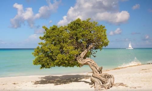 """最适合""""邂逅""""的岛屿,禁止未成年入内,中国人免签上岛"""