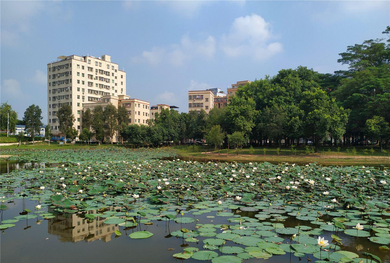 东莞公园随拍:荷塘,荷花,赏花的人