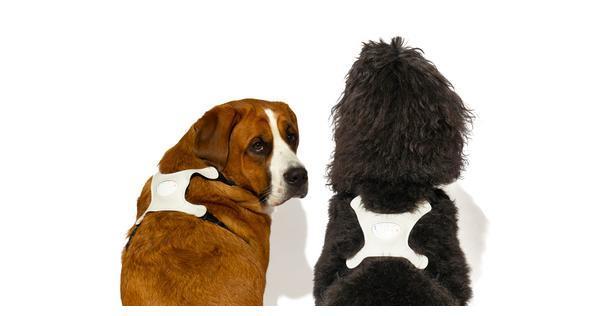 爱宠专场 Langualess推出可识别爱犬心情的穿戴设备