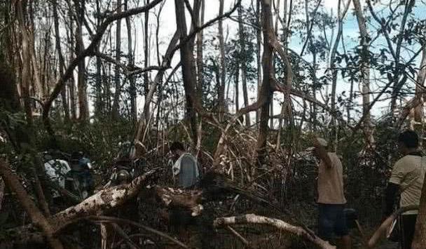 """亚马逊丛林出现一""""神奇生物"""",非常罕见,专家直言:还未成年?"""