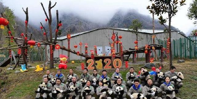 前方高萌!20只熊猫宝宝集体亮相拜年