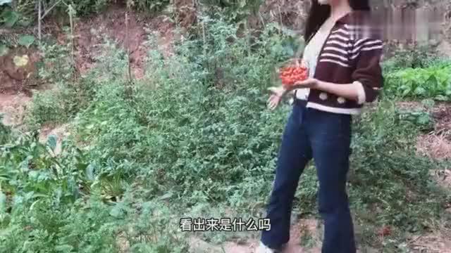 湘妹子从贵州移植过来的西红柿熟了自嘲最成功的一次投资
