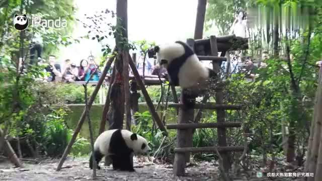 是熊猫就来斧头山木架之巅决战,争夺武林萌主!
