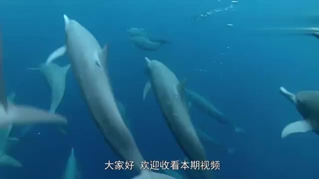 海豚游泳的时候经常跳出水面的原因是什么,网友:原来是这样啊