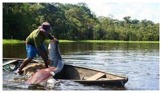 农村大叔无意之间捞上来一条大鱼,才刚上岸,富商就上门高价购买