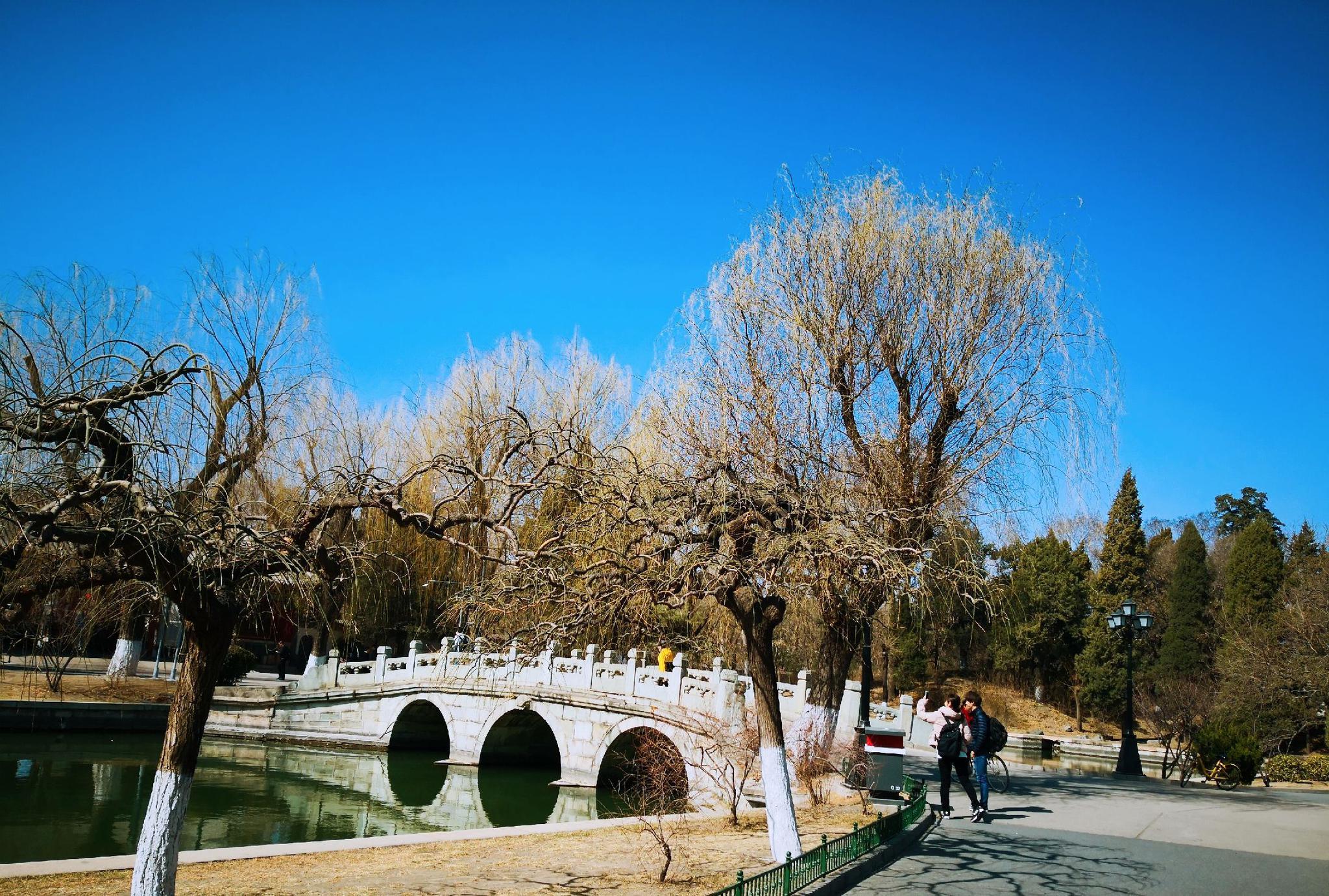 惊蛰!北京大学的春色原来这样美