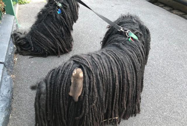 夫妇带着狗散步,发现狗身上有个东西,走近一看……