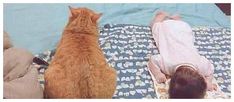 橘猫陪女儿一起长大,3个月后回家,看到此画面直接傻住