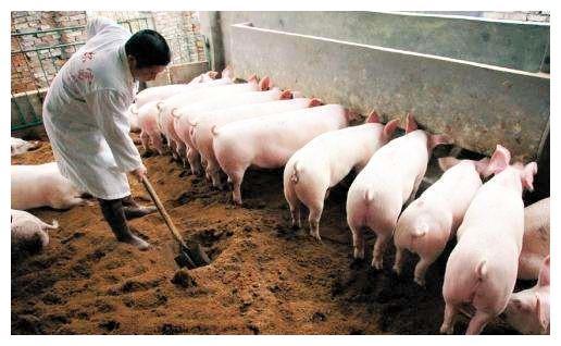 中国真正的养猪大王:平均每月进账10亿,他一年能卖掉1100万头猪