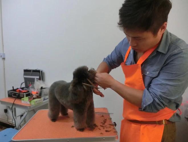如何学好宠物美容师培训技术
