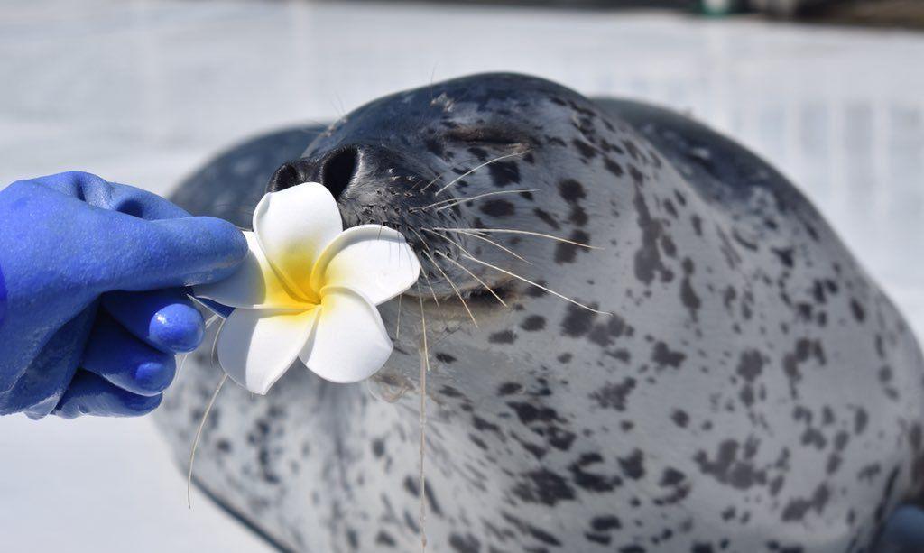心情不好的话看看这只胖墩墩的斑海豹,保证瞬间治愈所有不开心